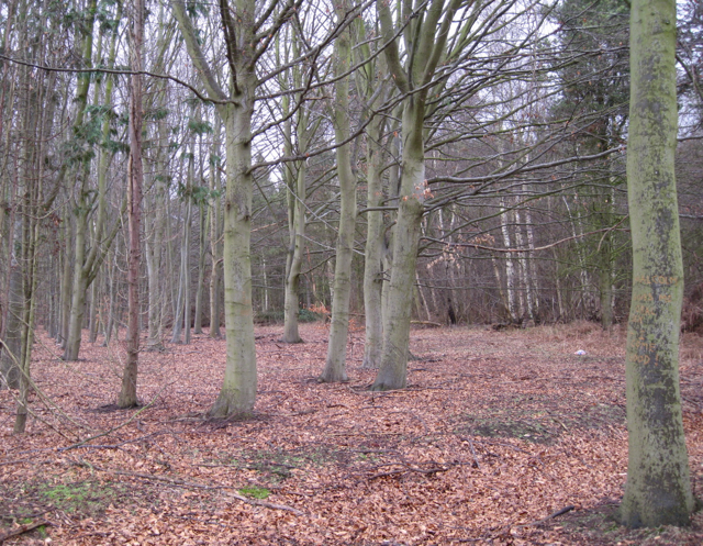 In the western corner of Waverley Wood