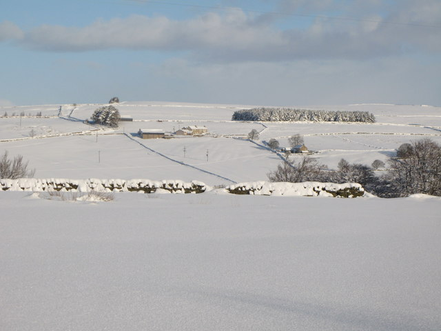 Snowy pastures near Lonkley Head (2)