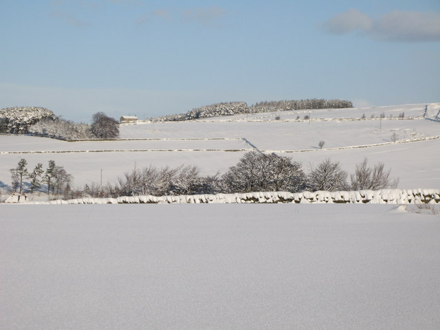Snowy pastures near Lonkley Head (3)