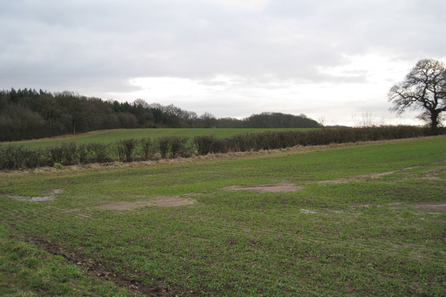 Southwest side of North Cubbington Wood