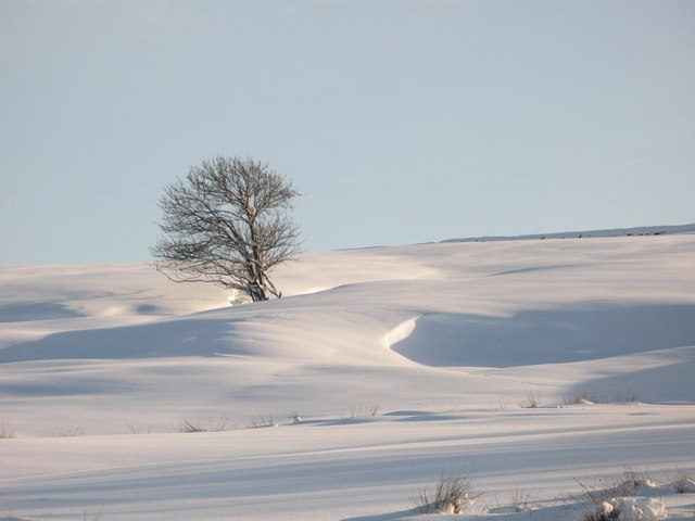 Bare tree in snowy pastures above Shilburn