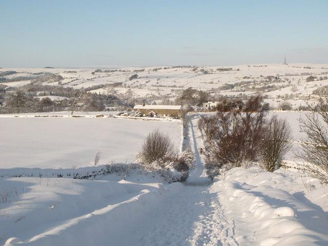 Snowy pastures above Lonkley Head (5)