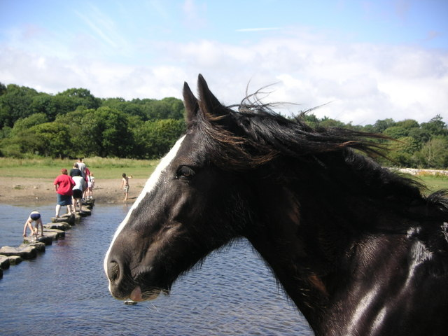 Horse at the stepping stones