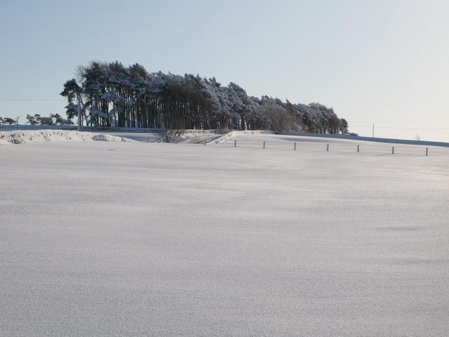 Snowy pastures and woodland near The Spittal