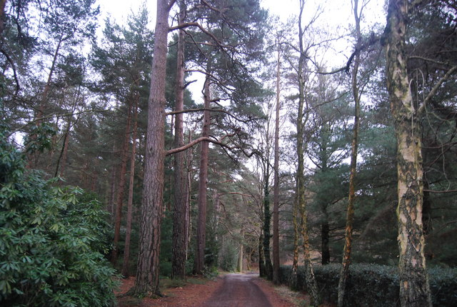 Avenue of trees, Bedgebury Forest