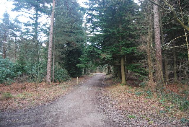 Cycleway joins the bridleway