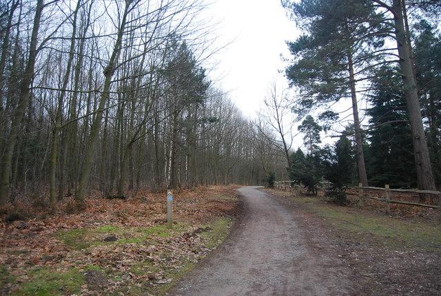 Bridleway & cycleway head south, Bedgebury Forest