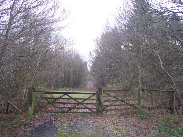 Access track into Newlands Wood