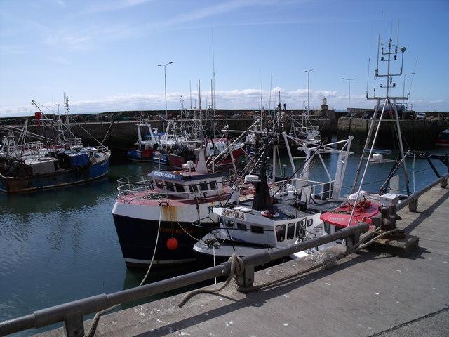 Pittenweem, harbour scene
