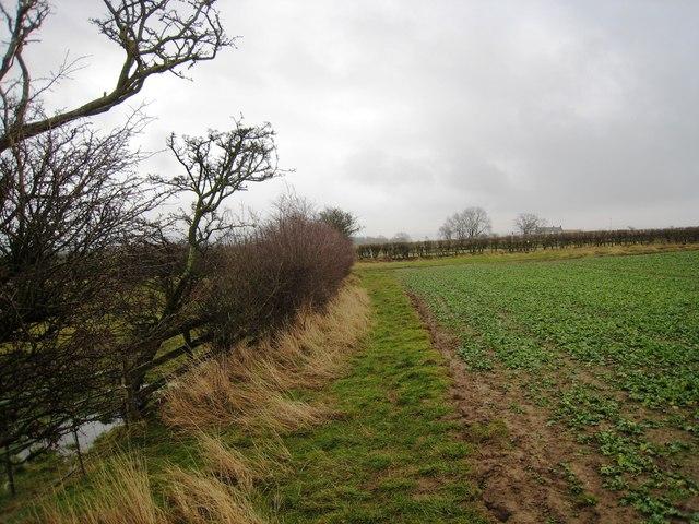 Footpath near Barley Hill