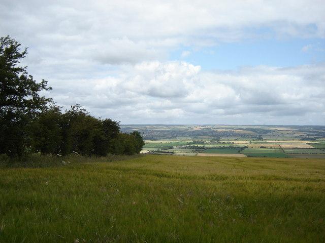 Field  Edge  East  Heslerton  Brow