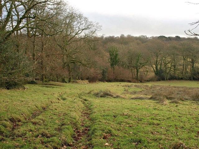 Field, Culm valley