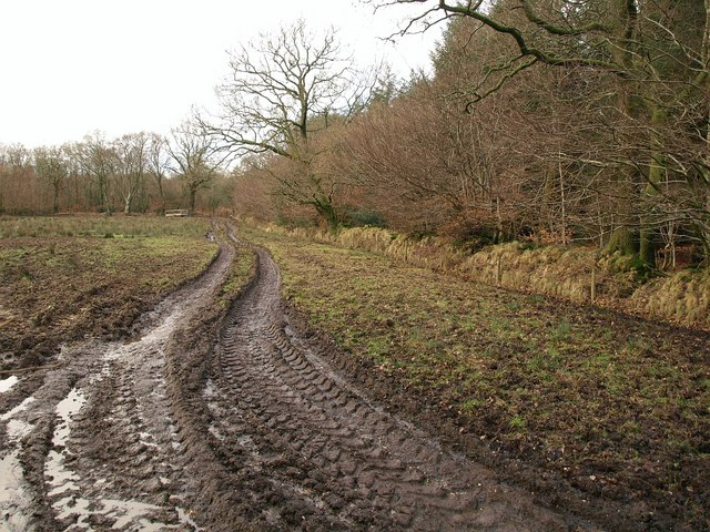 Field and track near Westcombe