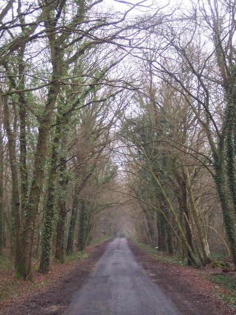 Etchden Road in Brickhurst Wood