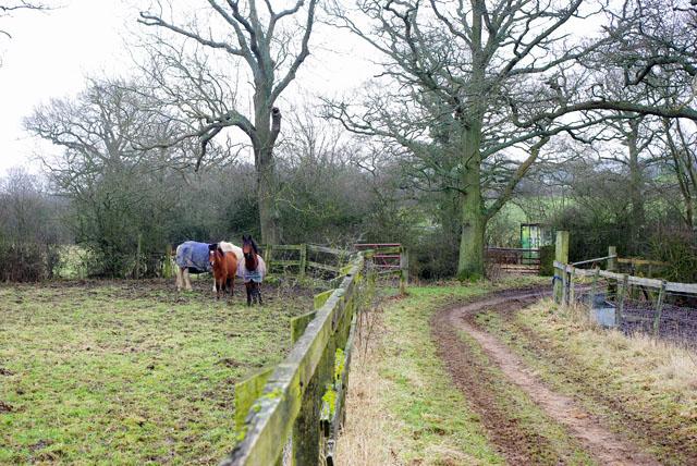 Three horses in a muddy corner