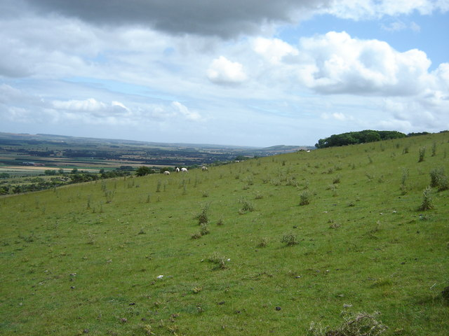 Wolds  Pasture