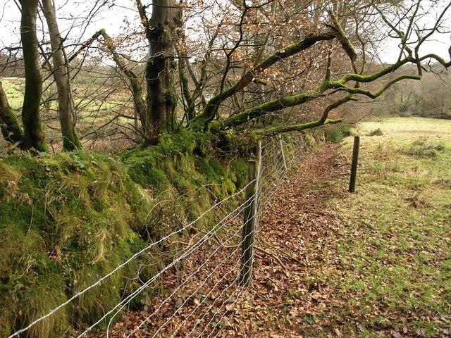 Field boundary, Westcombe