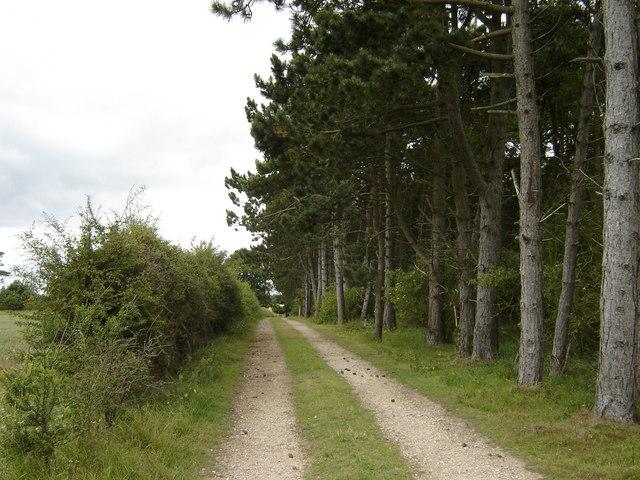 Track  alongside  Plantation