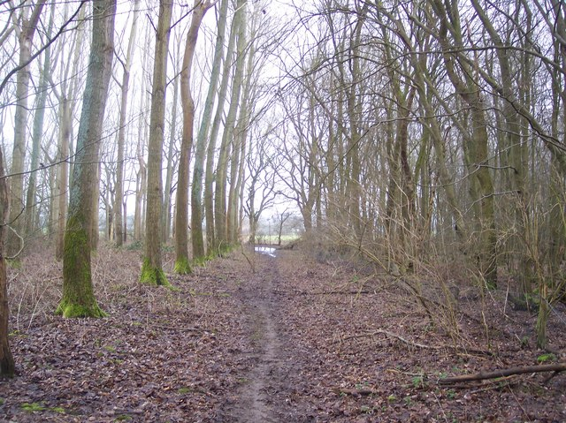 Footpath in Frid Wood