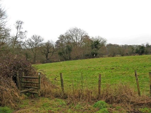 Public footpath through field
