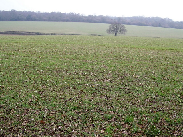 Arable land near Whiteparish