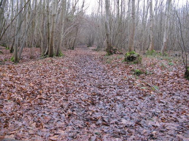 The Sussex Border Path west through Big Copse