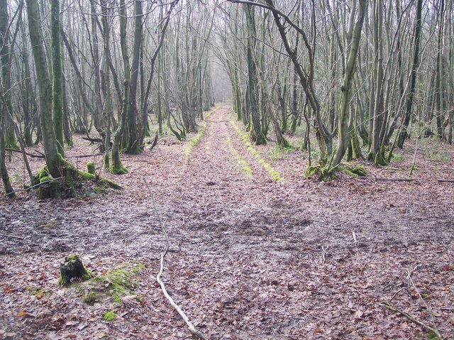 Footpath and track junction in Lamberden Wood