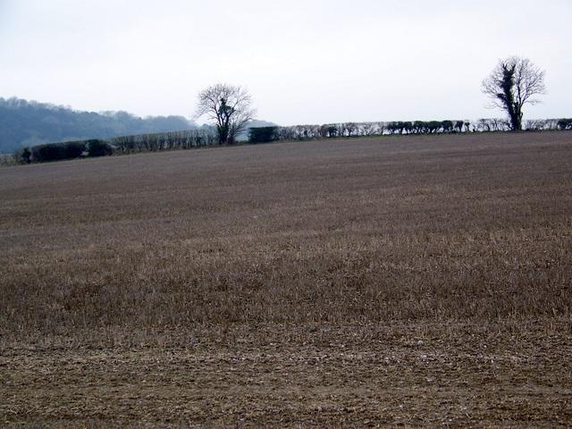Stubble near West Dean