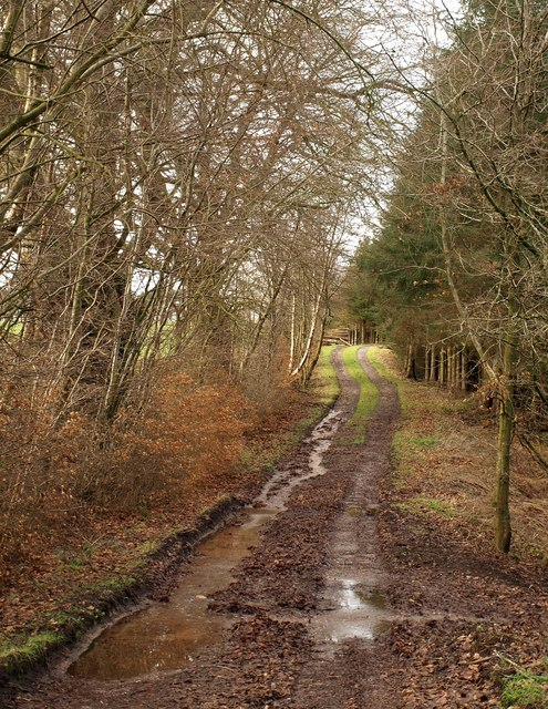 Track, Biscombe Wood
