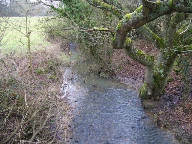 Stream, West Dean