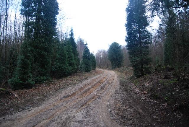 Muddy forest track, Bedgebury Forest