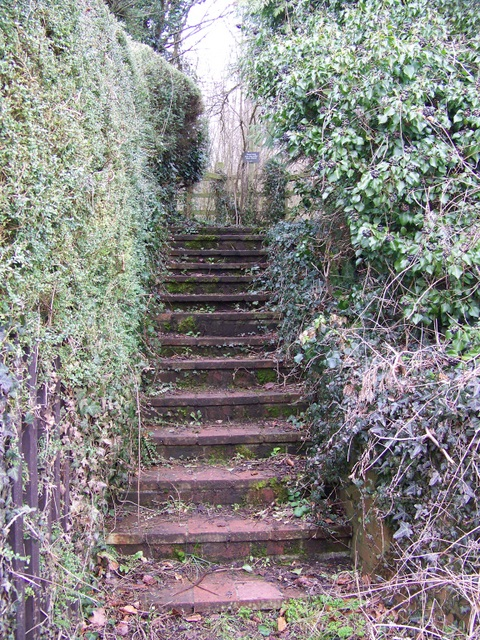 Steps, West Tytherley