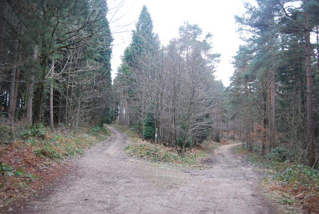 Bridleway goes left, Bedgebury Forest