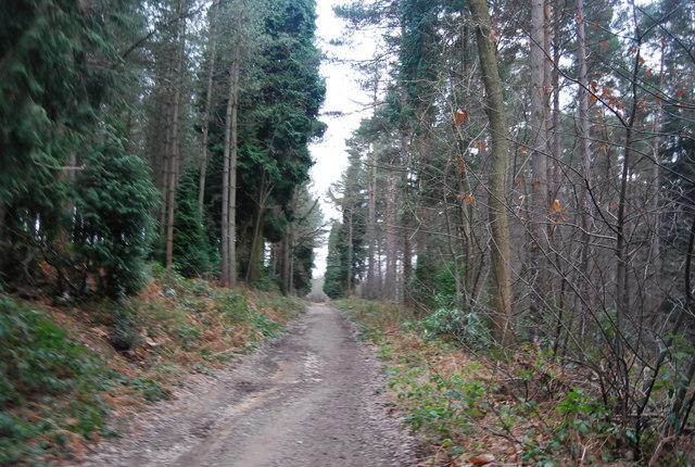 Bridleway, Bedgebury Forest