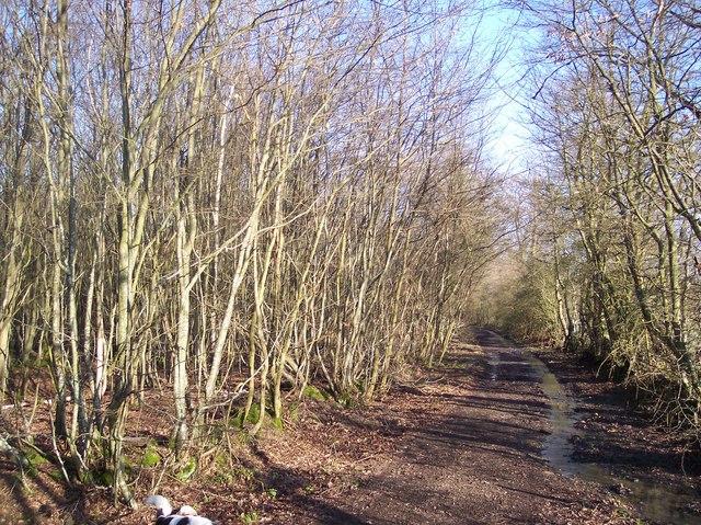 Gadsby Lane (byway track)