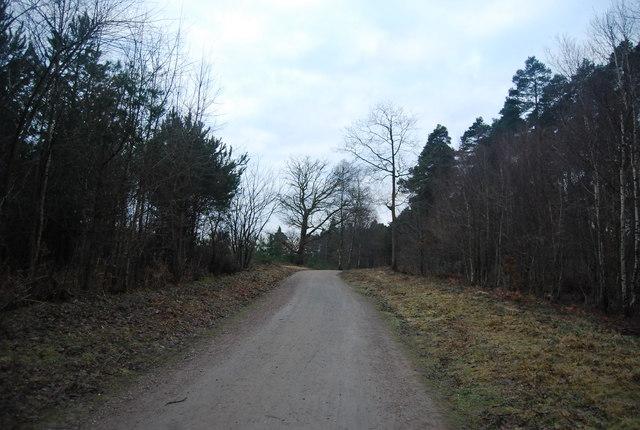 Bridleway heading south through Bedgebury Forest