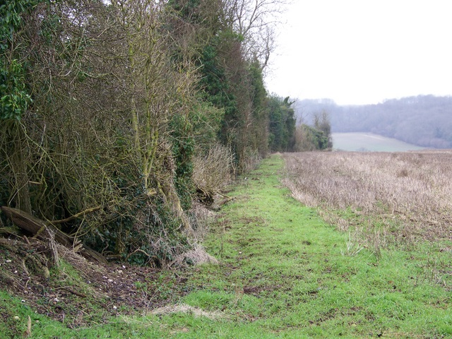 Ancient hedge near Buckholt