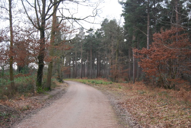 Forest track, Bedgebury Forest