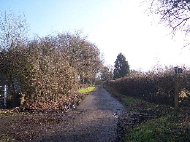 Green Lane near Green Lane Farm