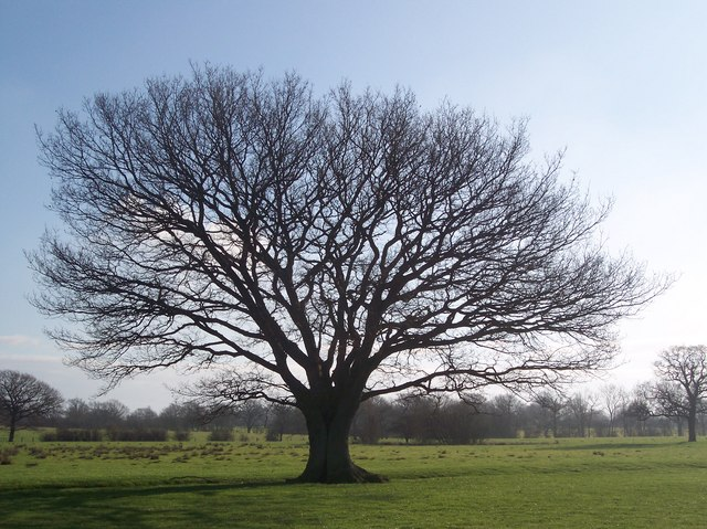 Gemini Tree