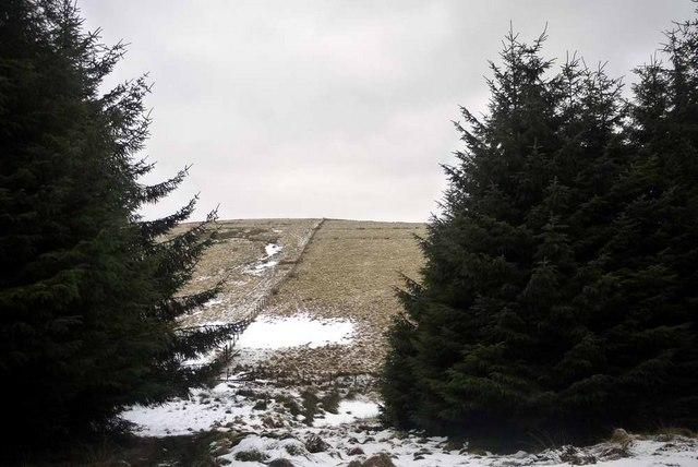 Fence on the SE slope of Wedder Dod