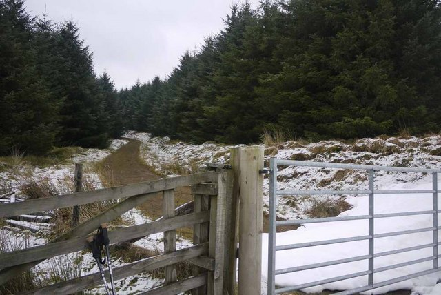The Southern Upland Way - into the forest at Glensalloch