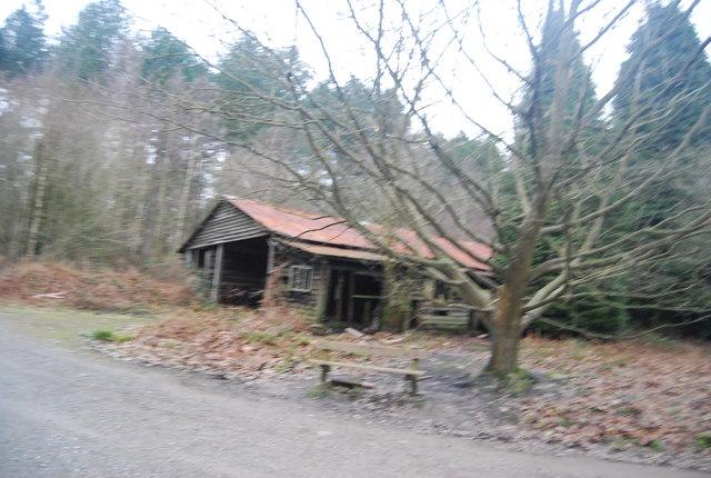 Derelict foresters hut, Bedgebury Forest
