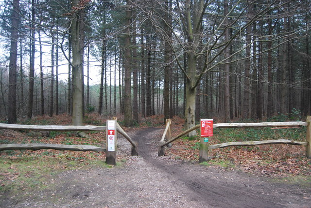 Red route, mountain bike trail, Bedgebury Forest