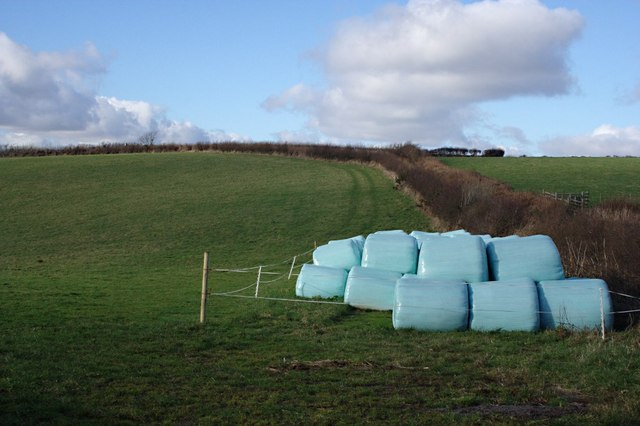 Grass and Bales