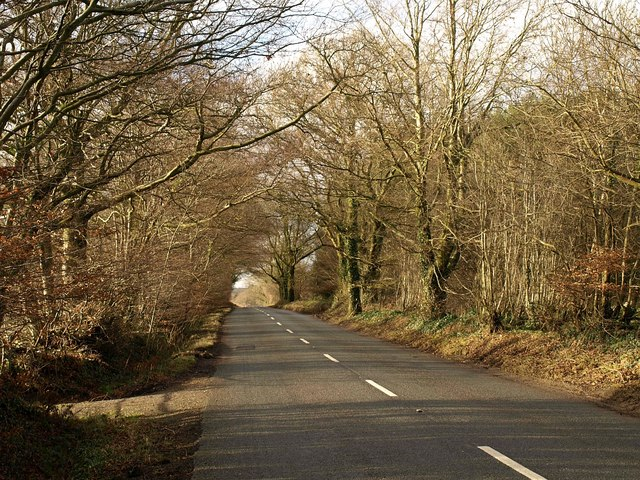 Road on Leigh Hill