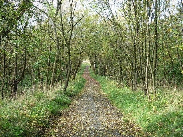 Track Through Glencryan Plantation