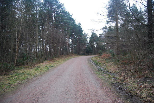 Bridleway heading south, Bedgebury Forest
