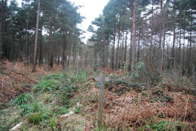 Bridleway Waymarker, Bedgebury Forest