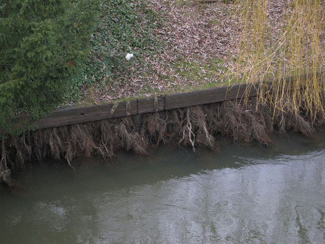 Willow roots in the Cam